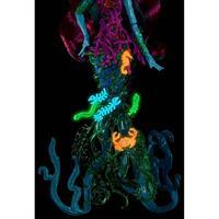 "Mattel Monster High ""DGS"" Schreckensriff Schülerin Posea Reef Detaillierte Ansicht 02"